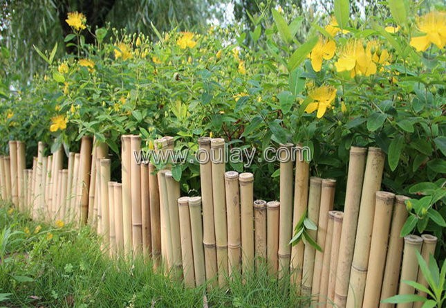 Bamboo Fence Oulay Bamboo Industry